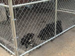 Puppies at the Animal Shelter in Scottsboro Alabama
