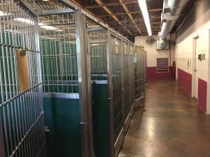 The pens at the Scottsboro Animal Shelter
