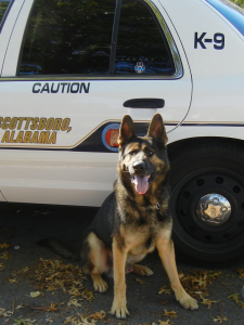 Scottsboro Police Dog